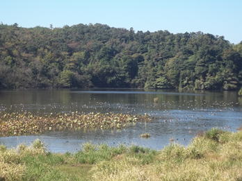 Katano Kamoike Lake (Ramsar site) on Oct. 18, 2014